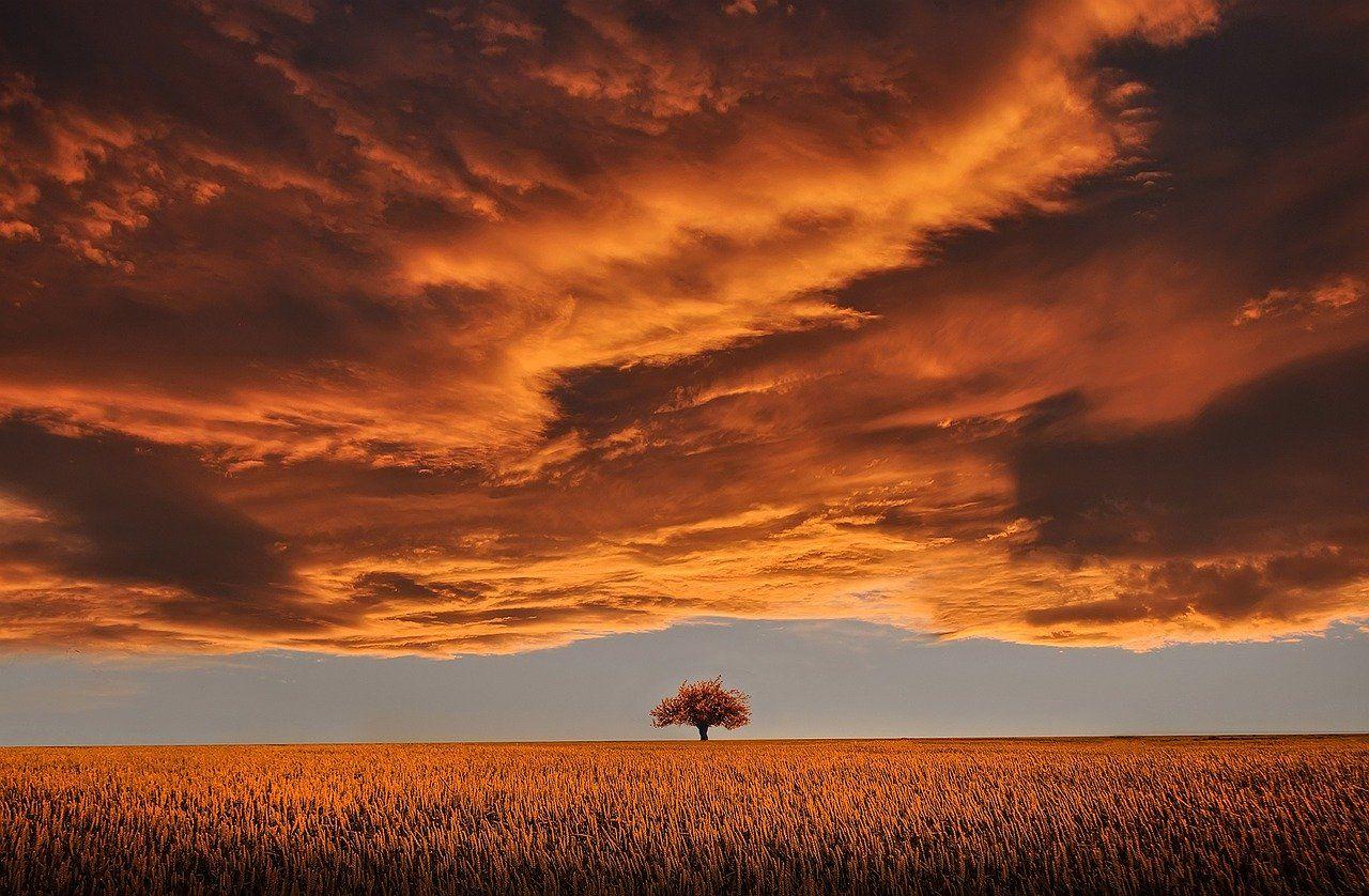 Puu ja maisema